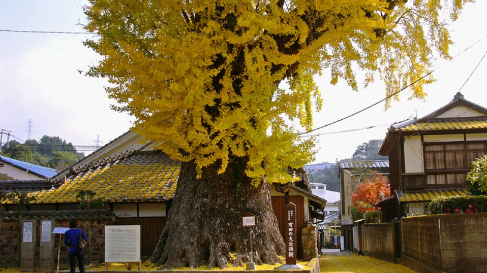 AritaJapan958x538.jpg