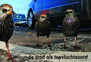 vogelbescherming_th.jpg